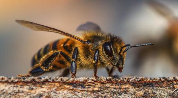 Jak wykonywać zabiegi ochrony, aby nie zagrażać pszczołom?