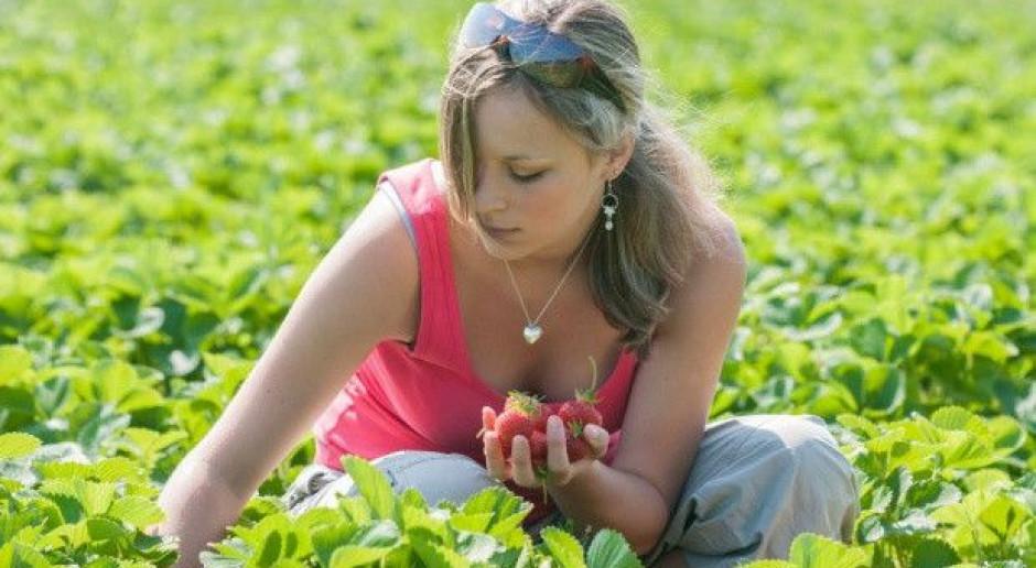 Coraz trudniej pozyskać pracowników do zbiorów owoców
