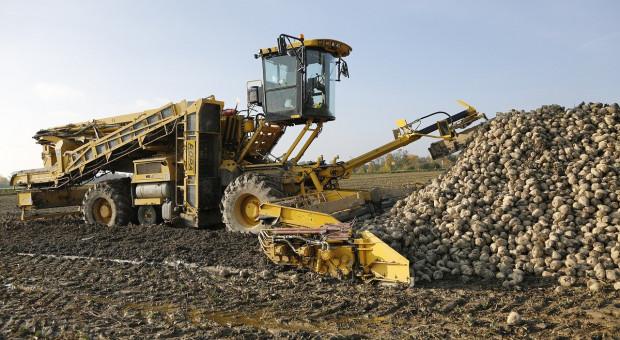 Ukraina ponownie zwiększa produkcję buraków cukrowych