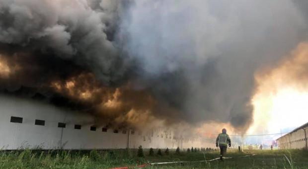 Pożar na fermie drobiu – spłonął wielki kurnik