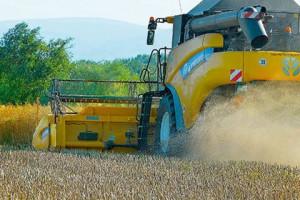 Hodowla to nasza pasja, stale poszukujemy rozwiązań, które sprostają zmieniającym się warunkom uprawy