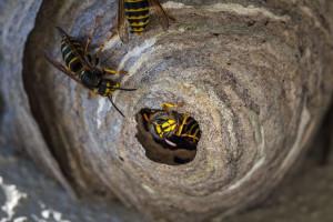 Groźne owady na posesji to problem gospodarza