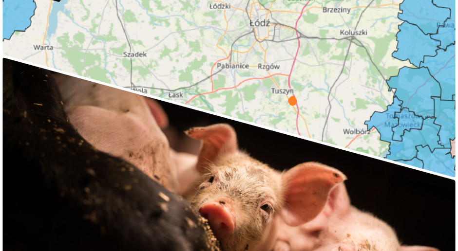 Podejrzenie ASF w stadzie świń w woj. łódzkim