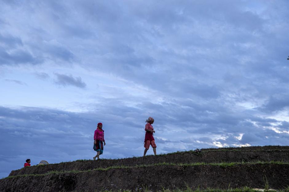 Rolnicy w całym kraju przestąpili do wcześniejszego zbioru kukurydzy i innych uprawy na swoich polach, aby zrobić miejsce na zasadzenie ryżu na czas. Pora monsunowa zaczęła się w Nepalu zgodnie z przewidywaniami, daje to rolnikom nadzieję na obfite plony; Fot. PAP/EPA/NARENDRA SHRESTHA