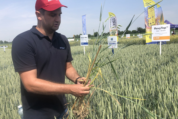 Według Szymona Struzika z BASF celując w plon ziarna zbóż powyżej 7 t/ha, dwa zabiegi regulacji i trzy zabiegi fungicydowe to konieczność (JŚ-S).