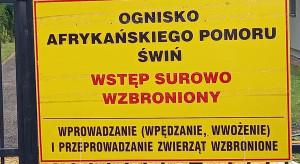 ASF w Łódzkiem - służby likwidują stada, rolnicy wyprzedają świnie