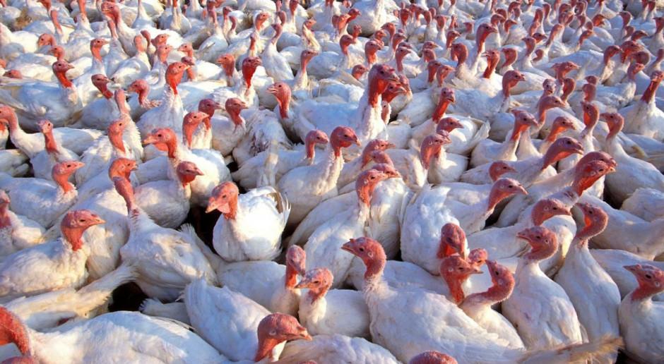 Ognisko grypy ptaków u drobiu w Małopolsce