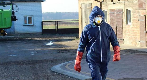 Dwa nowe ogniska ASF u świń - w Wielkopolsce i na Lubelszczyźnie