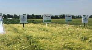 Hodowla Roślin Strzelce: nowości wśród odmian zbóż ozimych