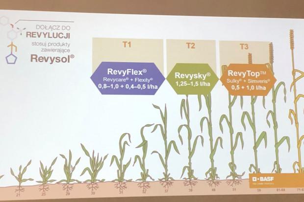 Program ochrony fungicydowej zbóż według BASF Polska (fot. JŚ-S).