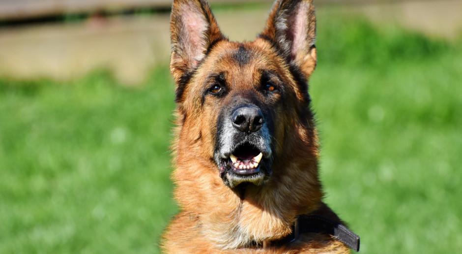 Ustawa regulująca status zwierząt w służbach uchwalona przez Sejm
