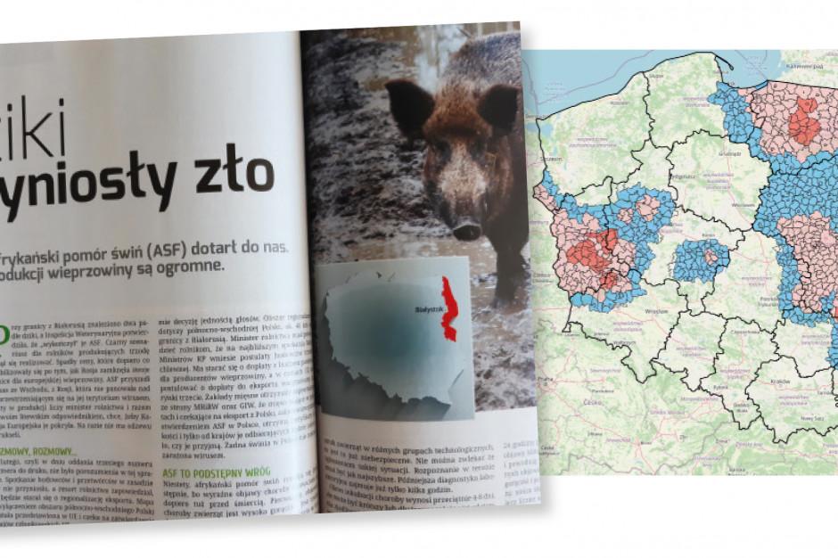 """Współczesna historia pisze wświatowej, ale iwpolskiej hodowli świń dość dramatyczny scenariusz związany zrozprzestrzenianiem się afrykańskiego pomoru świń. Wtzw. nowej erze szerzenia się ASF liczonej od2007r., gdypotwierdzono ogniska wGruzji, wirus rozprzestrzenił się poprzez Rosję, Białoruś czy Ukrainę właśnie doPolski. Pierwszy przypadek odnotowany wpostaci dwóch padłych dzików przy granicy zBiałorusią w2014r. był, niestety, niepozornym początkiem epidemii wPolsce. Wtrakcie kolejnych 7lat większość kraju została już zajęta przez tzw. strefy ASF zograniczeniami różnego stopnia, wyznaczonymi wzwiązku zwystępowaniem choroby. Niestety, końca choroby nie widać.  Hodowcy walczą oprzetrwanie narozchwianym rynku, aASF dodatkowo krzyżuje plany, ogranicza rozwój iwprzypadku wybuchu ogniska przynosi dotkliwe straty. Nazdjęciu archiwalny numer """"Farmera"""" z2014r. donoszący opierwszym wystąpieniu ASF wPolsce, aobok aktualny zasięg, jaki dziś obejmuje choroba wpopulacjiświń idzików."""