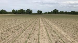 Realne korzyści z rozwiązań rolnictwa precyzyjnego Claas i 365FarmNet