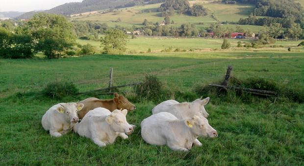 Zwiększenie opłacalności produkcji wołowiny w oparciu o nowy model hodowli bydła