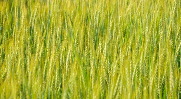 Płody rolne wcenie