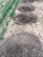 Kompost roślinny zdodatkiem wapna magnezowego jest bardzo dobrym nawozem. Obecność jonów wapnia podczas kompostowania przyśpiesza cały proces