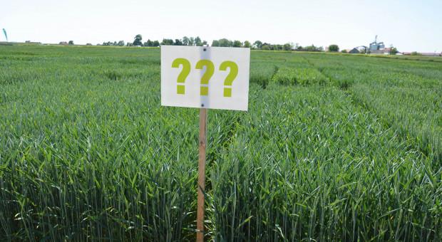 Jak wybierać odmianę do siewu? Zapytaliśmy o to rolników