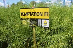 Temptation F1 został zarejestrowany w 2020 r.