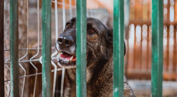 Prawa zwierząt znów do nowelizacji