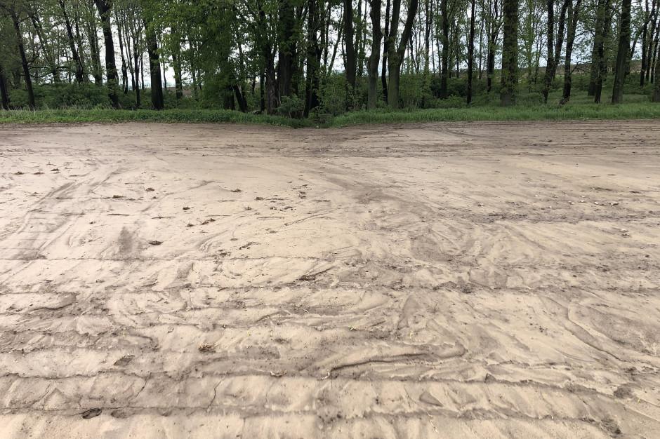 Ryc. 1. Zamulenie kukurydzy krótko po ulewie./fot. VH Polska