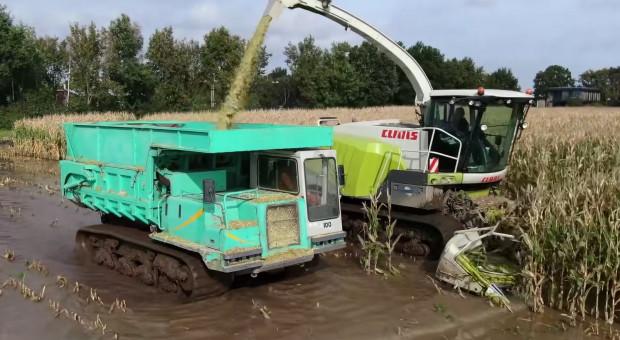 Zbiór kukurydzy w ekstremalnie mokrych warunkach!