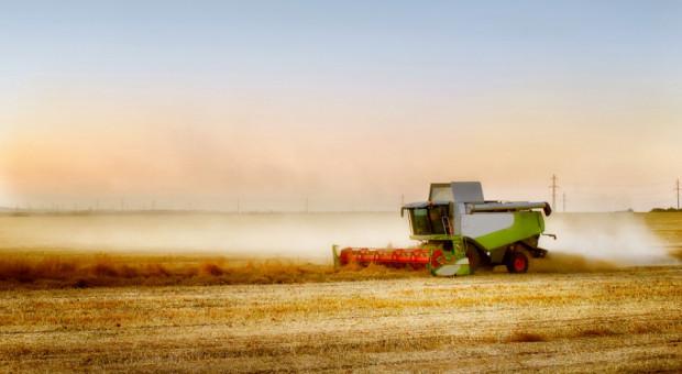 Małe żniwa na dobre spodziewane za dwa tygodnie. Jaka prognoza cen zbóż?