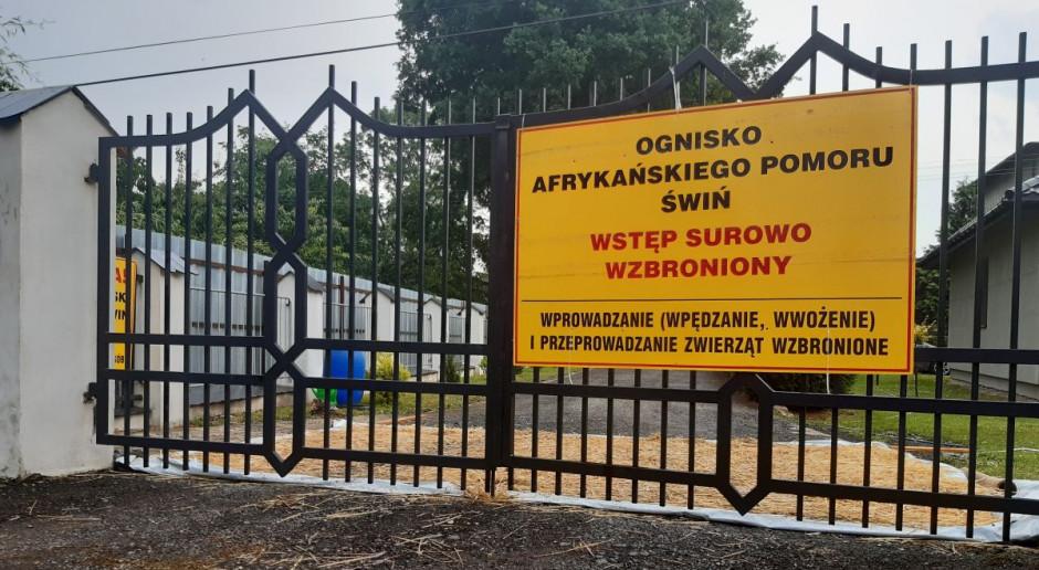 ASF w Łódzkiem: walka trwa, lecz kto zawinił?