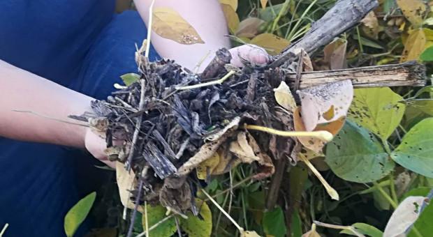 Bayer nagrodzi rolników za ograniczanie emisji dwutlenku węgla
