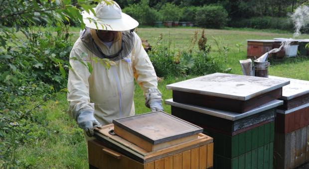 Pszczelarze mają więcej czasu na złożenie wniosku o zwrot kosztów