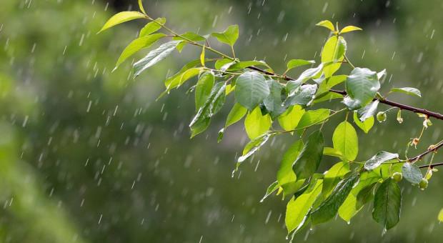 Czwartek chłodny i deszczowy