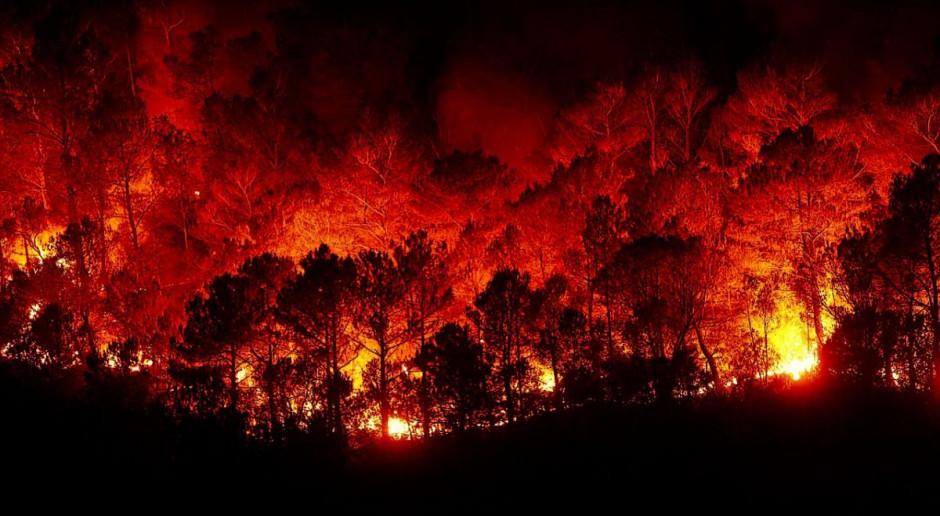 Cypr: Ogromny pożar opanowany, władze liczą straty