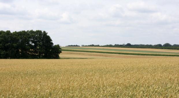 Które spółki nie dokonały wyłączeń z dzierżawionych gruntów? I co dalej z tą ziemią?