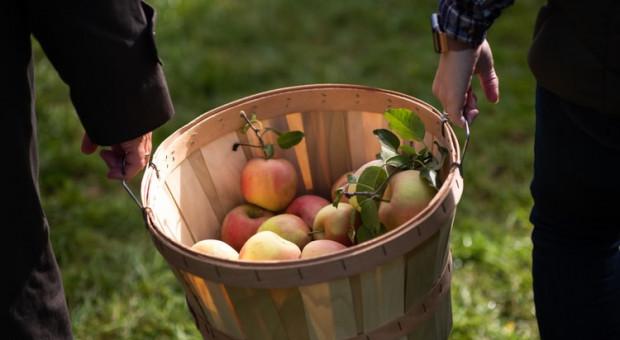 Na jakie odmiany jabłek warto postawić, aby zwiększyć zysk?