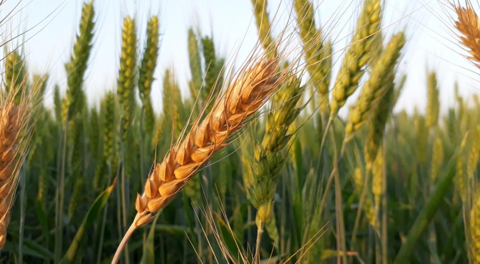 Gdzie szukać towarów rolnych z gwarancją jakości?