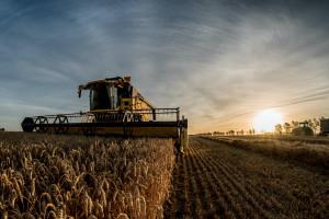 Notowania cen surowców rolnych - podsumowanie maja i czerwca