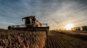 Żniwa 2021: Delikatny spadek cen zbóż