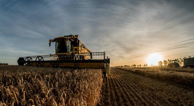 DBV: Prognoza zbiorów zboża w Niemczech w 2021 r.