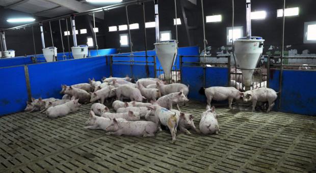 System SLIDE – kontrola produkcji i poprawa rentowności chowu świń