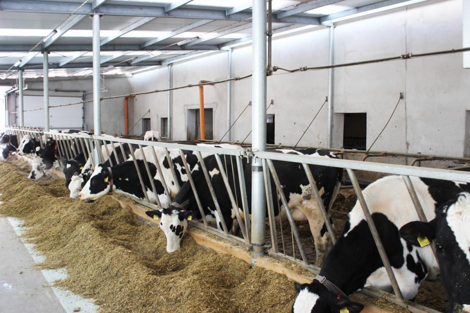 Zraszacze wykorzystywane do chłodzenia krów można wykonać we własnym zakresie