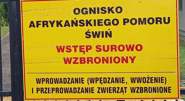 15 ognisko ASF wśród świń - duże stado w Wielkopolsce