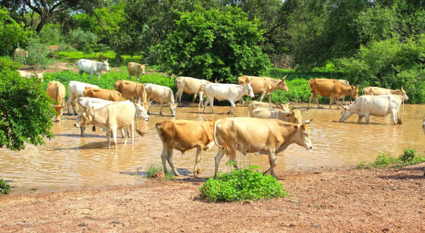 Nigeria: złodzieje bydła zabili 35 mieszkańców wiosek