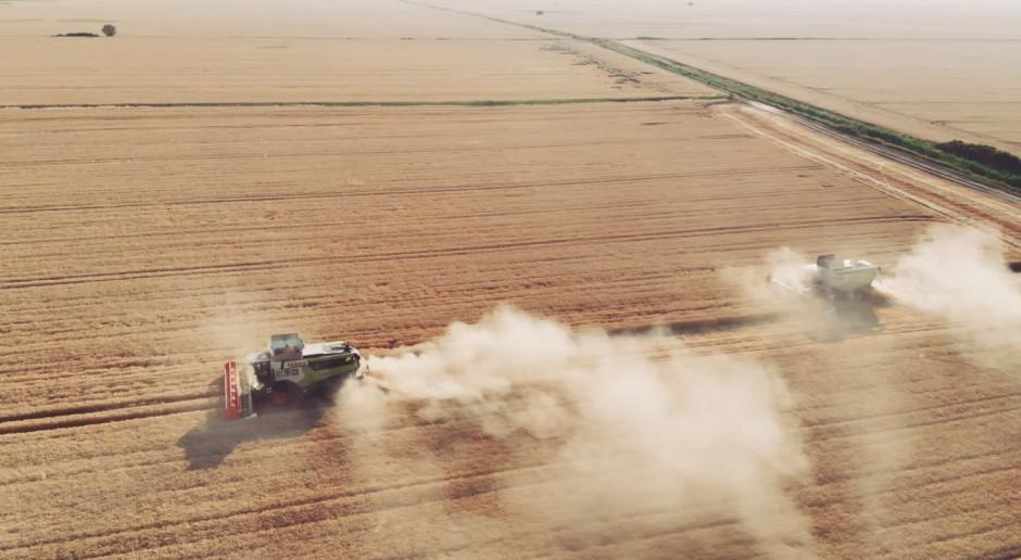 FARMER w Rumunii i wielkie żniwa - 15 kombajnów i tysiące hektarów
