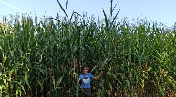 Znajdź najwyższą kukurydzę i wygraj nagrody