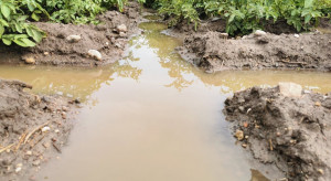 Burze i deszcze nawalne niszczą uprawy polowe
