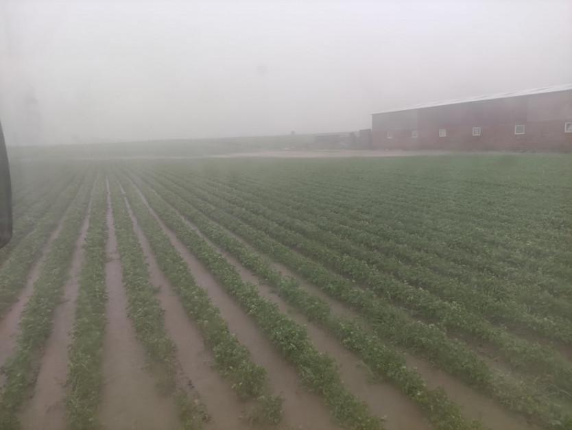 Deszcze nawalne i stagnująca woda w uprawach w powiecie łęczyckim Fot. M. Szczepaniak