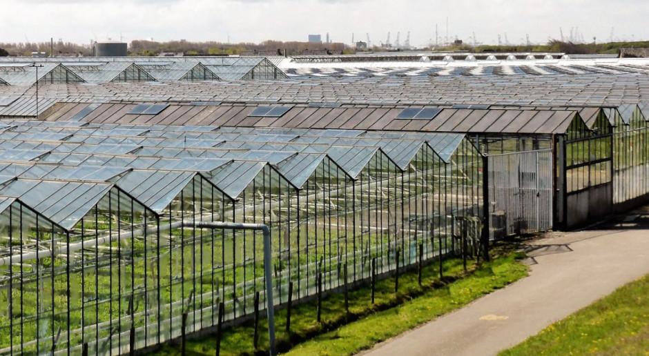 Holandia: coraz mniej chętnych z Europy Wschodniej do pracy w rolnictwie i ogrodnictwie
