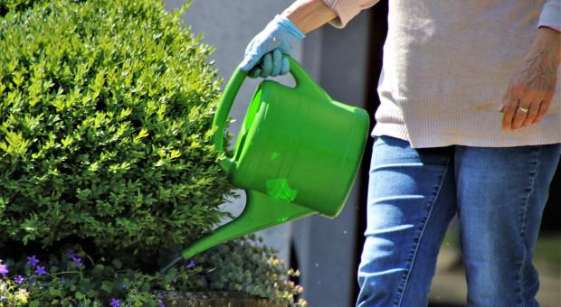Jak prawidłowo zadbać o rośliny ogrodowe latem?