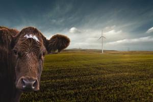 Niemcy: Rośnie liczba gospodarstw z ekologiczną hodowlą zwierząt