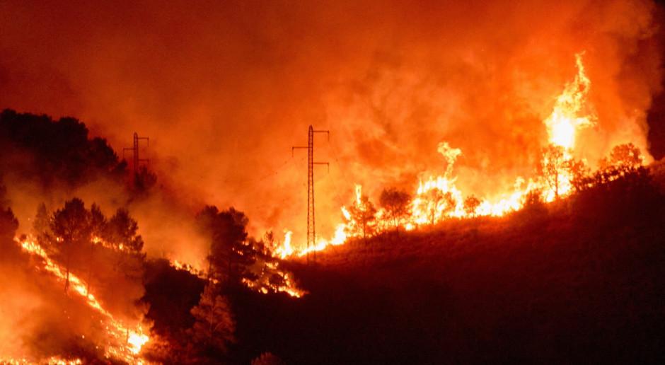 Płoną lasy w Katalonii, ogień pochłonął już 1,3 tys. hektarów