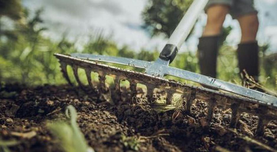 Poznaj 10 kroków, które przybliżą Cię do założenia trawnika w ogrodzie